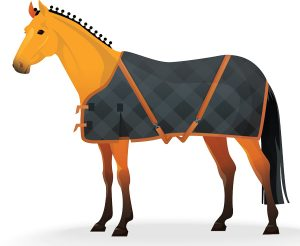 Blanketed Horse Infographic - Blanketing at a Glance