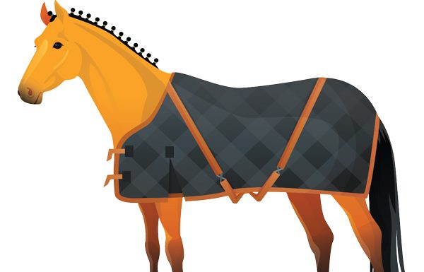 Blanketed Horse Infographic