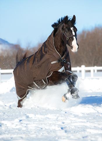 Horse Blanket Fit