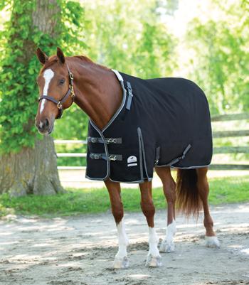 Blanket on a Narrow Horse