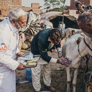 Veterinarian in Pakistan