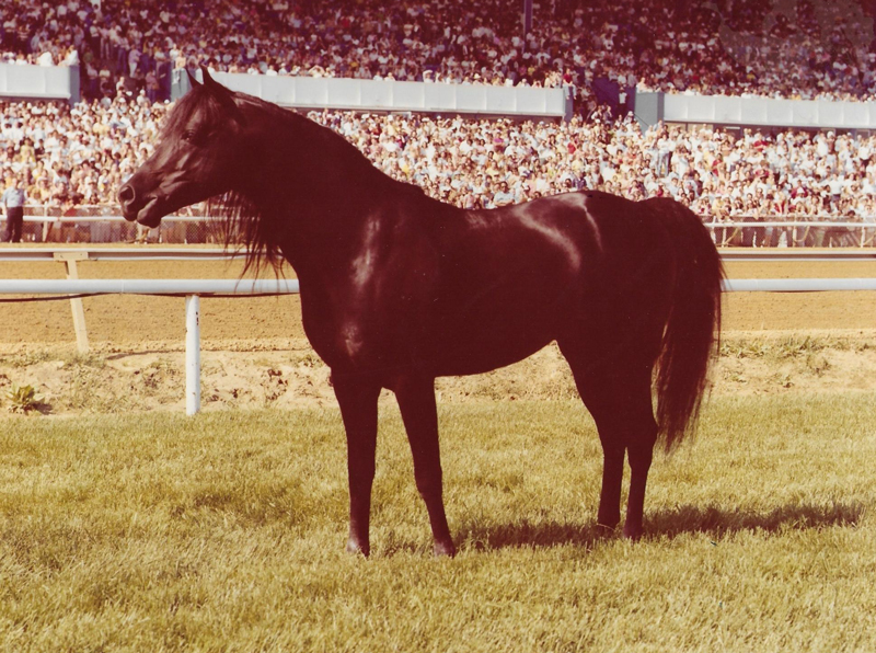 Cass Olé, aka The Black Stallion