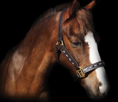 Cavallo Designs Halter