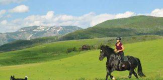 Alyssa Mathews and Nash - Discover the Horse