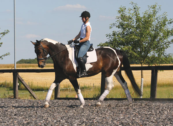 Dressage Exercises Circles and Squares