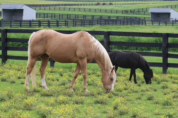 Best of Friends: Companion Animals for Your Horse - Horse Illustrated