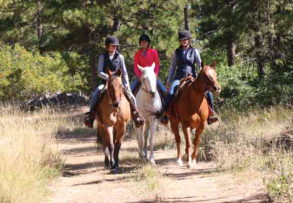 Drifters Hearts of Hope Dude Ranch - Rehoming Ranch Horses