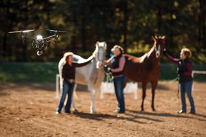Drone around horses