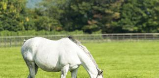 Horse spring nutrition