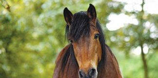 Cute Horse - Equine Emotional Intelligence