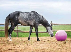 Horse Toy - Horse Fear