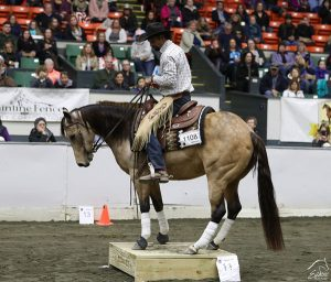 Versatile Horse and Rider Competition at Equine Affaire