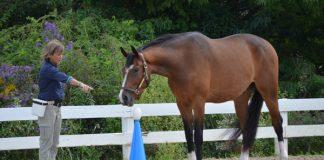 Shawna Karrasch and positive reinforcement training