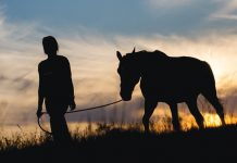 Leading a Horse Silhouette