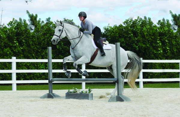 Rider exercises over poles or low jumps - Horse jump takeoff