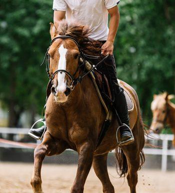 Equine Conditioning - Exercising Horse