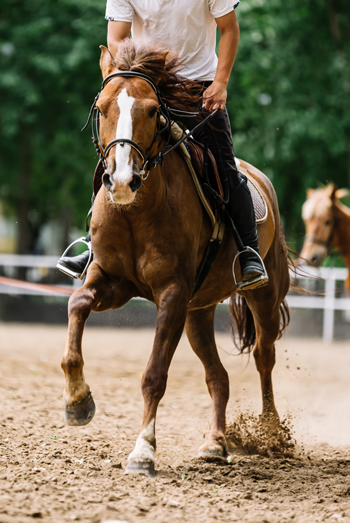 Equine Conditioning - Exercising Horse