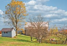 Fall Farm Scene with Horses