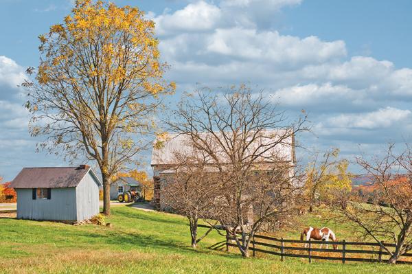 Fall Farm Scene with Horses