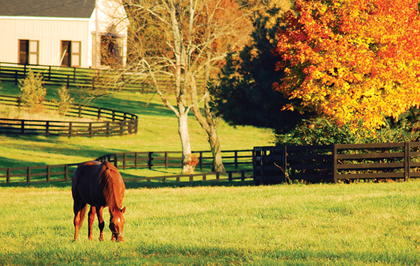 Fall Forage - Fall Prep for Horse Health