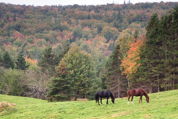 Horses during Autumn, or Fall - Fall Horse Care