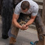 Impact of COVID-19 on Farriers and Veterinarians