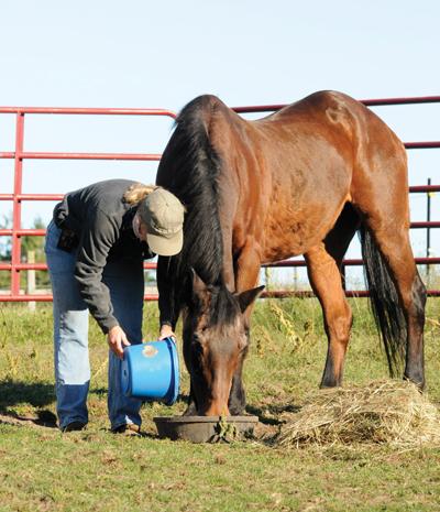 Feeding a senior horse