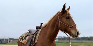 Flame - My Right Horse Adoptable Horse of the Week