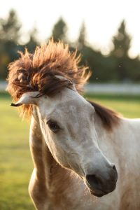 Flies swirling around horse's head.