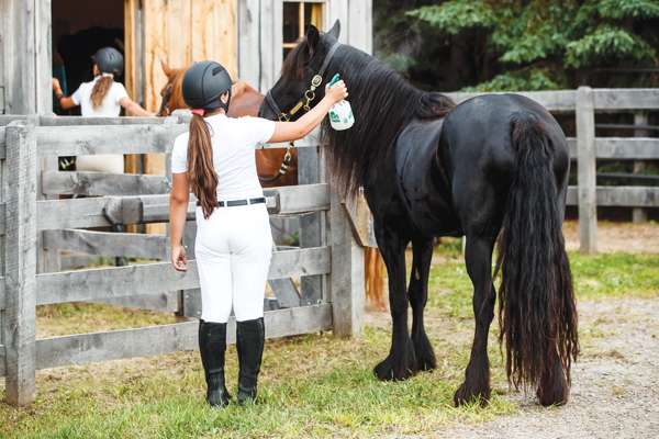 Fly spraying a horse to prevent flies