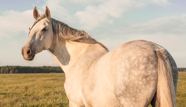 Fostering a Horse