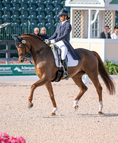 Oldenburg mare Ravenna and Andrea Woodard - German Warmblood