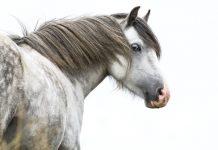 Pony Bad Habit - Gray pony