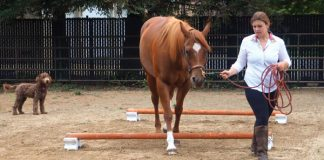 Ground pole exercises for horses.
