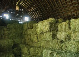 Hay Stored in a Barn
