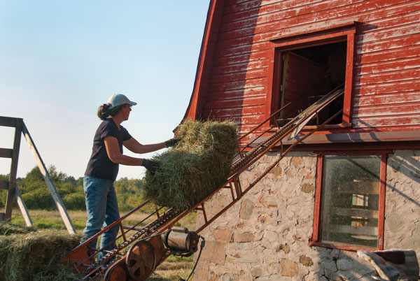 Using a Hay Elevator to Store Hay