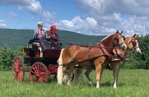 Bill Hendershot driving a pair of horses