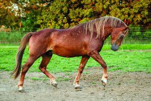 Hallelujah horse mustang in paddocks.