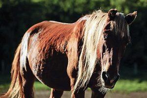 Blind stallion standing peacefully.