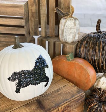 Horse Halloween DIY Pumpkin