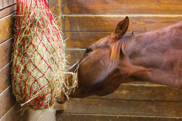 Horse Eating Out of Hay Net - Spring Nutrition