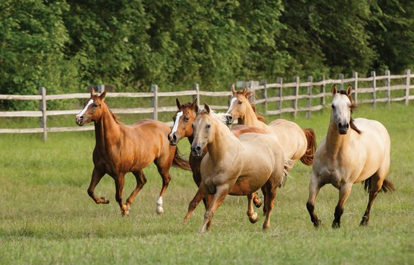 Horses in a Herd - Risk Management for Pastured Horses