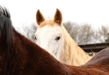 ASPCA and The Right Horse Hooftober