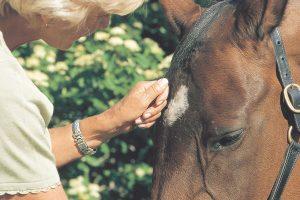 Horse and rider close up.