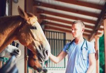 Veterinarian with horse in barn.