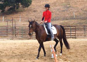 Walking horse next to pole exercise.