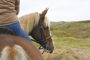 Close up of solo horse and rider.