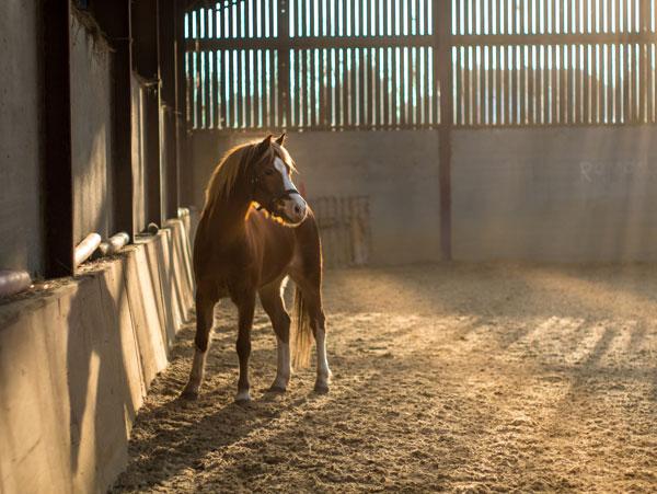 Horse in Indoor Arena