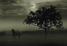 Horse at Night - Veterinary Care Middle Night
