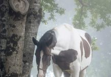 Horse and Dog - Vet Adventures - Broodmare Difficulties